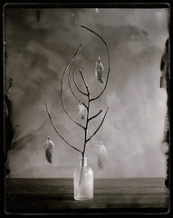 still 2 (biancavanderwerf) Tags: film glass analog mono branch feather vase analogue bianca dust scratch analoog dryplate
