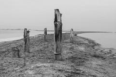 Holdouts (agianelo) Tags: white lake black sand shore piles
