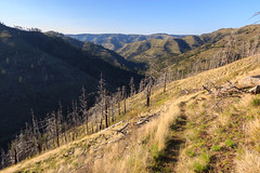 Descent back to Panjab (Matthew Singer) Tags: mountains washington unitedstates hiking bluemountains dayton scenicviews wenahatucannonwilderness umatillanationalforest