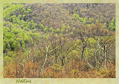 park mountain nature virginia spring bible christianity... (Photo: karl.wolfgang (Appalachian Son) on Flickr)