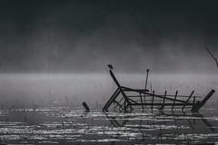 Sunbathing Bird (pawl_manchess) Tags: morning bali lake bird surreal tamblingan
