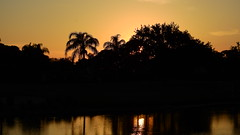 Bradenton Sunset (Jim Mullhaupt) Tags: pink blue sunset red wallpaper sky orange sun lake color reflection tree water weather silhouette yellow clouds landscape evening pond nikon flickr sundown florida dusk palm exotic p900 tropical coolpix bradenton endofday mullhaupt nikoncoolpixp900 coolpixp900 nikonp900 jimmullhaupt