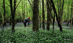 Soul soothing (Galway Pete) Tags: galway nature bluebells photography portumna ireand pskeltonphoto