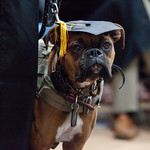"<b>Commencement 2015</b><br/> Commencement 2015. May 24, 2015. Photo by Kate Knepprath<a href=""http://farm6.static.flickr.com/5448/17876200328_480222f064_o.jpg"" title=""High res"">∝</a>"