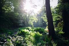 Rombergpark Dortmund (thoma.melanie) Tags: botanical garden dortmund germany plants forest sun spring flowers daylight day