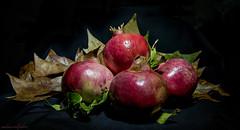 (nadiaorioliphoto) Tags: pomegranates stillife fruits sfondonero interni red