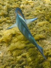 DSCF0818 (washuugenius) Tags: photo hawaii kauai underwater fish keebeach