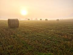 Misty haybales (Cornish Northerner) Tags: misty hay bales field autumn