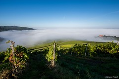 DSC_2660 (Marlon Fried) Tags: herbst nebel landschaft natur makro bokeh bltter weinberg tau fall autumn macro leaves fog dew landscape vine