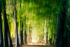 The Avenue (Stuie W) Tags: icm intentionalcameramovement trees leaves autumn light shade green canon eos