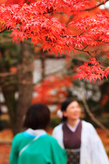 20161121 () Tags:         japan kyoto maple
