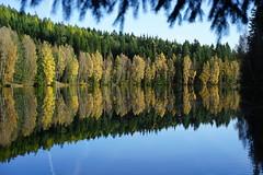 Autumn at the lake Bílý Halštrov (gerhardschorsch) Tags: sony zeiss wald wasser landschaft landscape 55mm fe55mmf18za spiegelung tschechien herbst laubfärbung weiseelster ilce a7r ilce7r