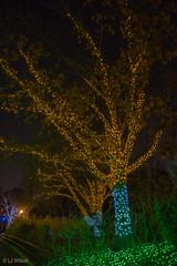 20161201 Brew Lights at the Zoo-3613 (Lora J Photography) Tags: zoolights fonz brewlights nationalzoo