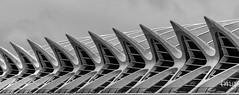Dientes de tiburn (Shark teeth) (Teo Martnez (temege)) Tags: valencia blanco y negro white black nikon gris museo ciencias dientes tiburn shark