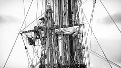 Instruments tuning (Jibaow) Tags: 2016 d7000 marine nikon voilier flickr noiretblanc bw voiles sailboat   seamen marins saintpetersbourg shtandart russian crew equipage russe marinevoiles seaman lgende ftedelamer calais2016 calais grement rigging