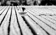 frozen morning (ELECTROLITE photography) Tags: frozenmorning frozen morning gefroren morgen murmel spiegelung reflektion reflection linien icy iced gelé matin blackandwhite blackwhite bw black white sw schwarzweiss schwarz weiss monochrome einfarbig noiretblanc noirblanc noir blanc electrolitephotography electrolite autumn winter