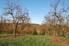 """Verger d'automne (Brigitte .. . """"Tatie Clic"""") Tags: 201011124 novembre automne arbres arbrenu branches herbe alle sentier chemin sansretouche verger perspective lotetgaronne aquitaine francesudouest"""
