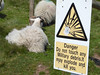 Castlelaw (davidmcnuh) Tags: midlothian castlelaw sign warning notice danger hazard army range firingrange sheep pictogram military debris ordnance explode explosion