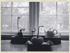 Gourd and Window (Mark Blanchard) Tags: fuji polaroid black white pumpkin window instant film tea pot orchid fp3000b