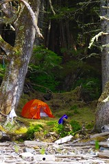 Orange tent pitched in the mossy shade near the shore in the Great Bear Rain Forest, BC (daniellacy562) Tags: freedom vacation adventure camping campsite centralcoast greatbearrainforest landscape leisure moss mossy nature orange outdoors shore sprucetree tent trees wilderness