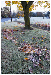 leaves (dunne_s) Tags: select leaves autumn naas ireland kildare
