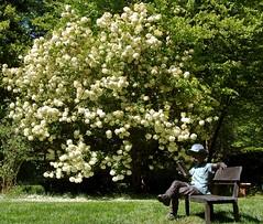 Gibbs Gardens - Ball Ground, Georgia (UGArdener) Tags: gardens horticulture japanesegardens publicgardens springtime manorhouse valleygardens cherokeecountygeorgia ballground jimgibbs monetbridge gibbsgardens