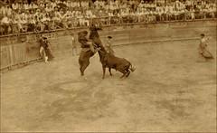 Bullfight at Reynosa (tombarnes20008) Tags: 1920s mexico real photo fight post bull ring card tamaulipas bullfight reynosa reginaldfranklinconroyvance maryvance