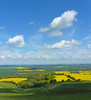 Yellow on yellow (Messent) Tags: pictures england yellow spring poetry day haiku rape whitehorse ridgeway faringdon poetryandpicturesinternational poetryforall lieoftheland pwpartlycloudy