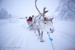 0049 (lesley v) Tags: holiday snow ice finland reindeer husky sweden arctic aurora northernlights january2013 davviarcticlodge
