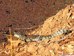 "croc bebé • <a style=""font-size:0.8em;"" href=""http://www.flickr.com/photos/92957341@N07/8749368833/"" target=""_blank"">View on Flickr</a>"
