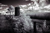 Nature will prevail (erglis_m (Mick)) Tags: blackandwhite bw 20d canon ir blackwhite interesting canoneos20d silo nsw infrared sugarcane infraredfilter wyrallahroad