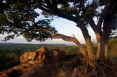 TX13P0420 (catnahat) Tags: statepark trees nature landscape oak texas pentax hillcountry overlook inkslake burnet kx