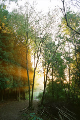 (5) (paul (england)) Tags: wood uk autumn trees light england sun sunlight mist leaves misty pine golden october path surrey v backlit contrejour sunbeams 2010 fetcham intosun fetchamdowns 102010 20102818