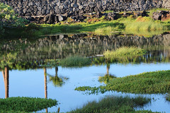 Marshy Waters (KatieFuji) Tags: nature water hawaii pond hilton peaceful calm fresh waters kona marshy waikoloa