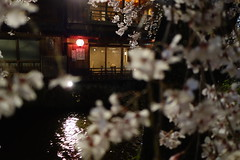 DSC08655 (Richard, enjoy my life!) Tags: flower japan river kyoto sony   sakura   dscrx100