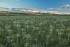 Araquem- Chapada dos Veadeiros (Namuchila) Tags: dos chapada veadeiros cavalcante goiás alcantara paulino goias araquem namuchila weverson