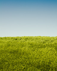 Lush Divide (Samuel Higgins) Tags: sky abstract green oklahoma field grass contrast highcontrast norman duality lush minimalism minimalist normanoklahoma samhiggins