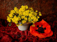 Dancing Queen (Colliefan) Tags: red stilllife color art love nature floral colors germany garden deutschland photo flickr photographie frankfurt blumen poppy wildflowers blooms multicolored colori arrangement farben bodegon gelbe wiesenblume yellowwildflower florastilllife