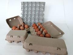 แผงไข่กระดาษ ถาดไข่กระดาษ pulp mold eggtray-8