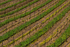 Tuscan Spring Vineyard (USpecks_Photography) Tags: italy green canon vineyard pattern wine earth stripes diagonal tuscany montalcino agriculture toscana tamron brunello toskana 18270 canon7d tamron18270
