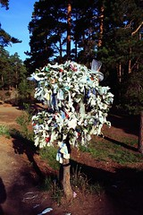 Wishes tree (Namicjo) Tags: park travel tree canon russia wish russie chelyabinsk