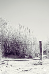 (getbehindme // alinekoehler.de) Tags: ocean life autumn sea summer vacation sun holiday travelling fall beach nature monochrome grass sunshine strand digital canon vintage fence germany photography eos rebel still sand warm sommer sandy urlaub dune violet warmth sunny baltic retro pole insel late zaun ostsee deserted dne menschenleer xsi poel sptsommer 450d efs55250mmf456is