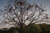 "Lagnur Tree <a style=""margin-left:10px; font-size:0.8em;"" href=""http://www.flickr.com/photos/41134504@N00/16975959447/"" target=""_blank"">@flickr</a>"