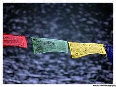 Sikkim Darjeeling Tour 2014 - Holy Scrolls (Raman_Rambo) Tags: trip bridge flowers cloud sunlight storm flower color green chicken tourism nature colors beautiful beauty grass fauna clouds forest river insect cherry photography waterfall high berry flora cherries colours tour berries natural cloudy bokeh buddha buddhist flag altitude bridges monk insects cock flags holy waterfalls shade poultry greenery furnace sunrays hen darjeeling depth boquet height scroll sikkim selective raman colorization gangtok selectivecolorization scrolls leaflets pelling lachung kangan kangna kangana ramansharma ramansharmadombivli kanchanzongda
