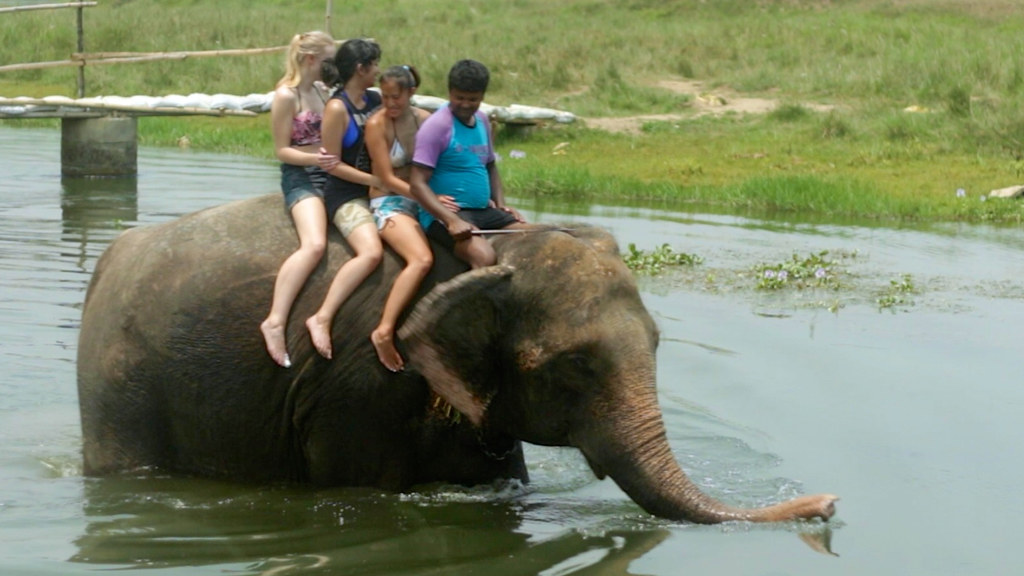 tourists on elephant in nepal