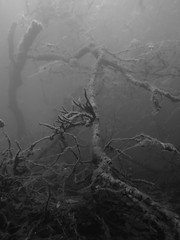 Underwater Landscape, Schmaler Luzin (yayapapaya77) Tags: trees plants lake germany see underwater branches pflanzen diving sponge ste bume feldberg mecklenburgvorpommern tauchen unterwasser schwamm schmalerluzin feldbergerseenlandschaft canonpowershotg15