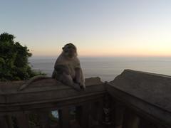 Le singe qui a volé les lunettes à Max