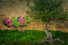 Olivenbaum (olipennell) Tags: park tree portugal wall graffiti olive lagos algarve baum mauer distriktfaro