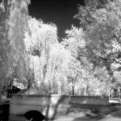 Carroll Park Bridge IR (scott_z28) Tags: park bridge trees blackandwhite bw nature water monochrome mi creek landscape ir pond michigan surreal hc110 historic willow infrared epson v600 yashica carrollpark hoya baycity 1875 635 tricities efke r72 dilutionb fredericklawolmstead ir820 charleshcarroll
