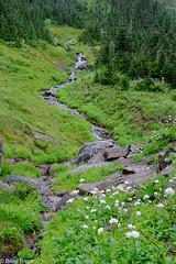 wet meadow-2016_08_09_115851_DSCF9993- (brianeagar) Tags: glaciernationalpark montana montananature 2016 august summer mountain green lush alpine forest water